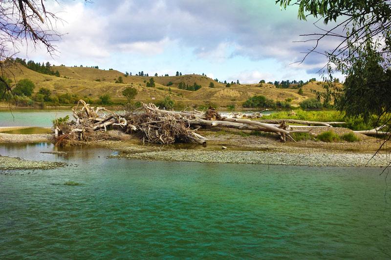 forsyth-driftwood-crop